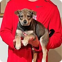 Adopt A Pet :: Oscar - New Philadelphia, OH