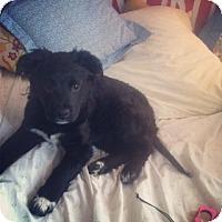 Adopt A Pet :: Bubbles - Brooklyn, NY