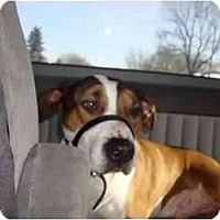 Adopt A Pet :: Murdoch - Toronto/Etobicoke/GTA, ON