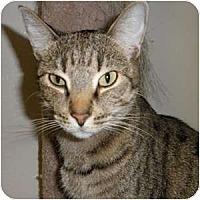Adopt A Pet :: Penny Lane - Phoenix, AZ