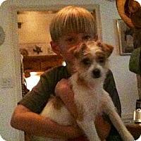 Adopt A Pet :: Gabby in Houston - Houston, TX
