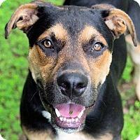 Adopt A Pet :: Ricardo - Charleston, AR