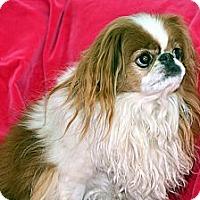 Adopt A Pet :: Putter - Aurora, CO