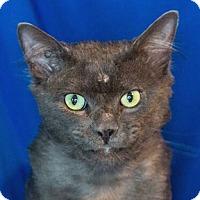 Adopt A Pet :: Pacino - Calgary, AB