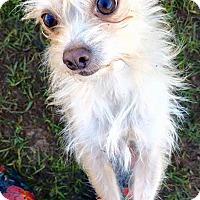 Adopt A Pet :: Mia - Fort Valley, GA