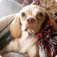 Adopt A Pet :: Peaches - Rancho Santa Fe, CA