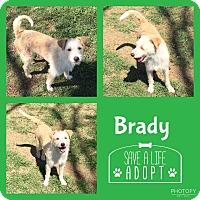 Adopt A Pet :: Brady - Snyder, TX