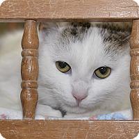 Adopt A Pet :: Wally - Medina, OH