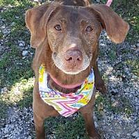 Adopt A Pet :: Reina - Lago Vista, TX