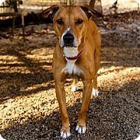 Adopt A Pet :: Butter - Decatur, GA
