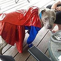 Adopt A Pet :: Tee - Geismar, LA