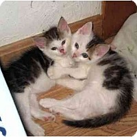 Adopt A Pet :: Robbie and Benjamin - Boston, MA