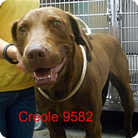 Adopt A Pet :: Creole - Greencastle, NC
