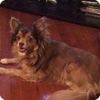 Adopt A Pet :: Alexis - Gilbert, AZ