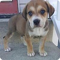 Adopt A Pet :: Lucky - Marlton, NJ