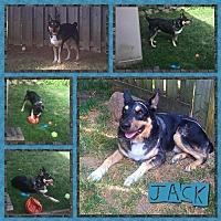 Australian Shepherd/Australian Cattle Dog Mix Dog for adoption in Toronto, Ontario - Jack