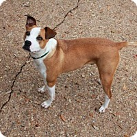 Adopt A Pet :: Bentley - Austin, TX