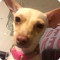Adopt A Pet :: Peaches(PAW) - Von Ormy, TX