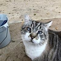 Adopt A Pet :: Edgar - El Dorado Hills, CA