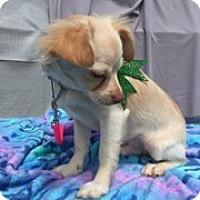 Adopt A Pet :: BRAM - Elk Grove, CA