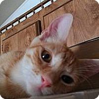 Adopt A Pet :: Caesar - Morgan Hill, CA