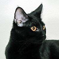 Adopt A Pet :: Harlie  (Female) - Yorba Linda, CA