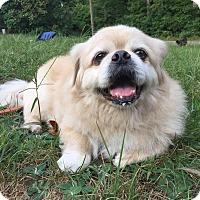 Adopt A Pet :: Mikey - Portland, ME