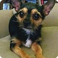 Adopt A Pet :: Garth - Andalusia, PA