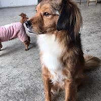 Adopt A Pet :: DUKE- Korea - Lucknow, ON