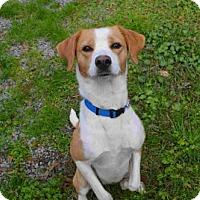 Adopt A Pet :: Shayla - thibodaux, LA