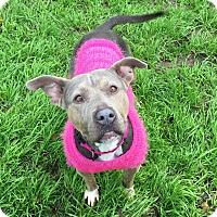 Adopt A Pet :: FEFE - Ojai, CA