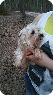 Yorkie, Yorkshire Terrier Dog for adoption in Crump, Tennessee - Scrappy