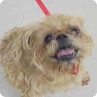 Adopt A Pet :: Gizmo - Gulfport, MS