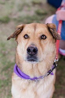 Labrador Retriever Mix Dog for adoption in San Diego, California - Alvin