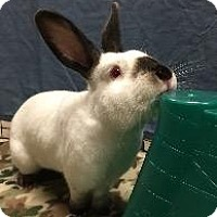 Adopt A Pet :: Rudolph - Woburn, MA
