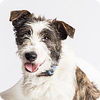 Adopt A Pet :: Meghan - Ogden, UT