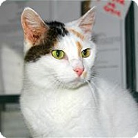 Adopt A Pet :: Gorgeous - Lincoln, CA