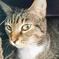 Adopt A Pet :: Sweetie - Bradenton, FL