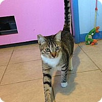 Adopt A Pet :: Sophia - Makawao, HI