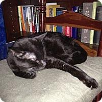 Adopt A Pet :: Joe - New York, NY