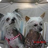 Adopt A Pet :: Lily (New England) - Gilford, NH