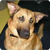 Adopt A Pet :: Tiffany - Rigaud, QC