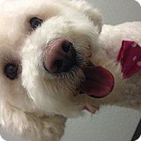 Adopt A Pet :: Dolly - South Gate, CA
