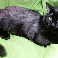 Adopt A Pet :: Francesca - Sarasota, FL
