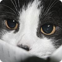 Adopt A Pet :: Junior - Rockaway, NJ