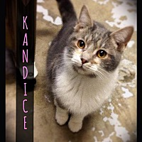 Adopt A Pet :: Kandice - Hartford City, IN
