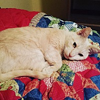 Adopt A Pet :: Sandy - Parkton, NC