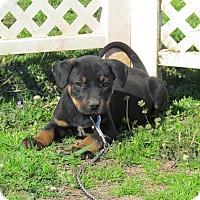 Adopt A Pet :: DESI - Hartford, CT
