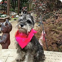 Adopt A Pet :: TALLIE - WOODSFIELD, OH