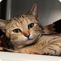 Adopt A Pet :: Anneliese - West Des Moines, IA